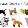NF Animal Control FAQs